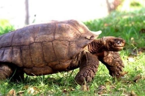 the giant tortoise at the Lekki conservation centre